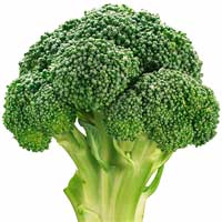 broccoli head The Health Benefits of Broccoli
